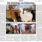 """Reportage im """"Vilshofener Anzeiger"""" über unseren Alpakahof - """"Die Schönlinge von Schönerting"""""""